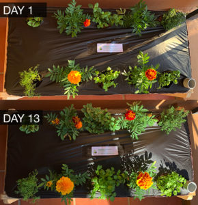 OurFarmBox - Day 1 & Day 13