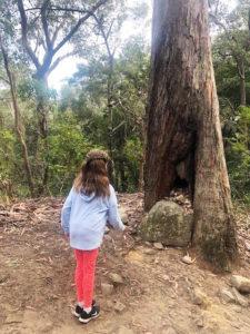 Wishing tree at Parramatta Lake