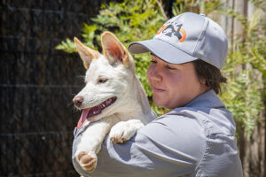 Sydney Zoo keeper and dingo pups
