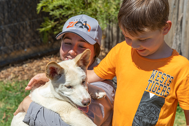 Boy patting Dingo pups at Sydney Zoo
